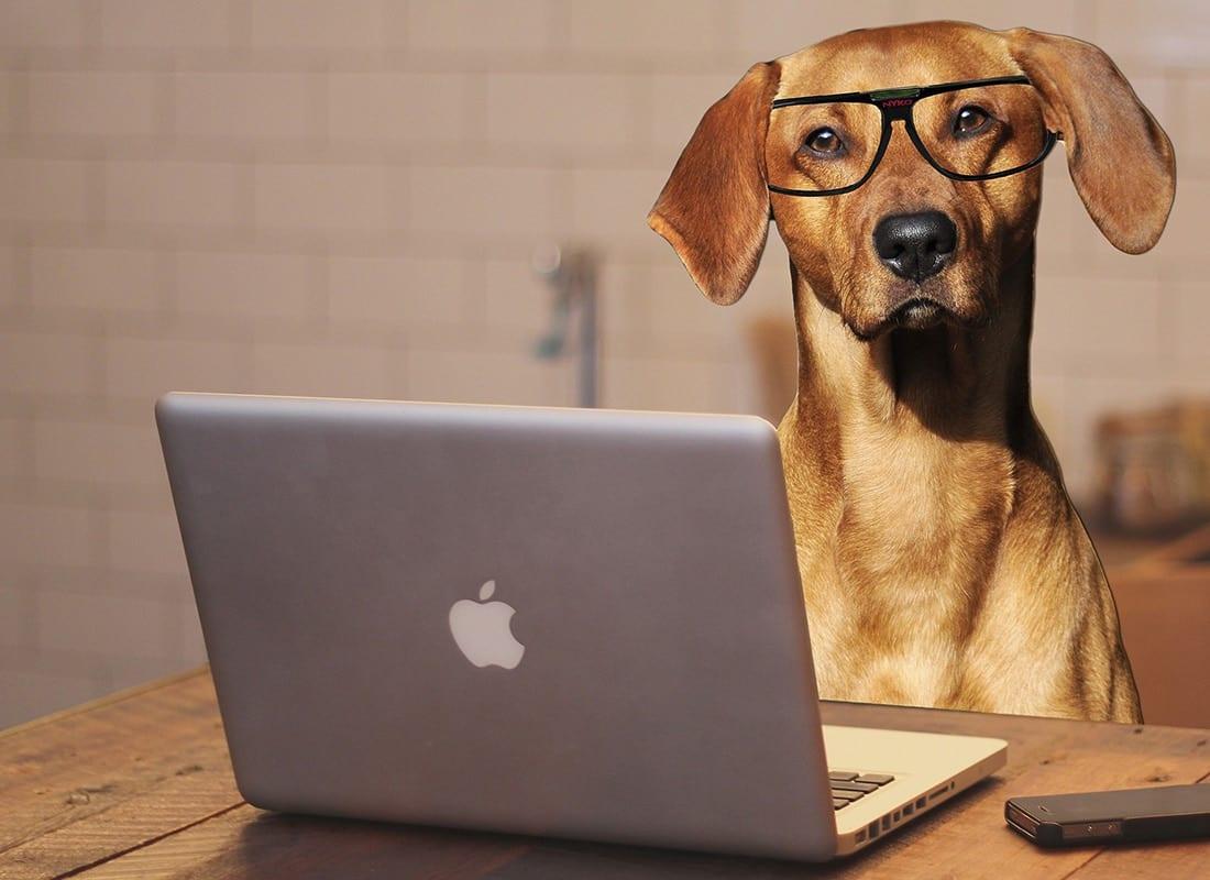 BOM Baxter Online Meeting Win Win Dog Training 1100px